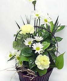 Black basket planter filled with daisies and greenery.