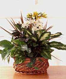 Secretaries' Day Dish Garden - Same-day Delivery - Bice's Florist